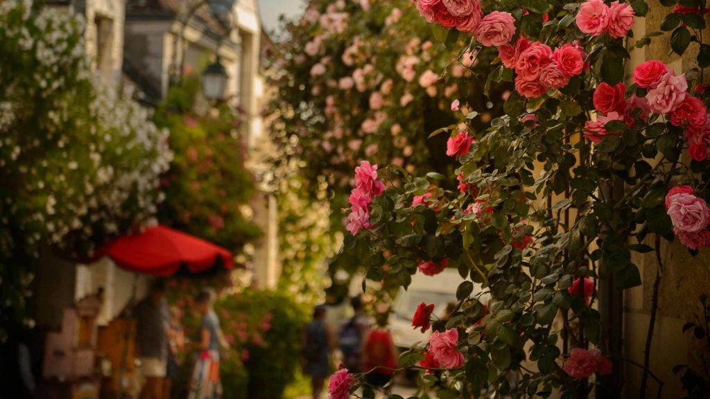 The roses of the village-garden of Chédigny
