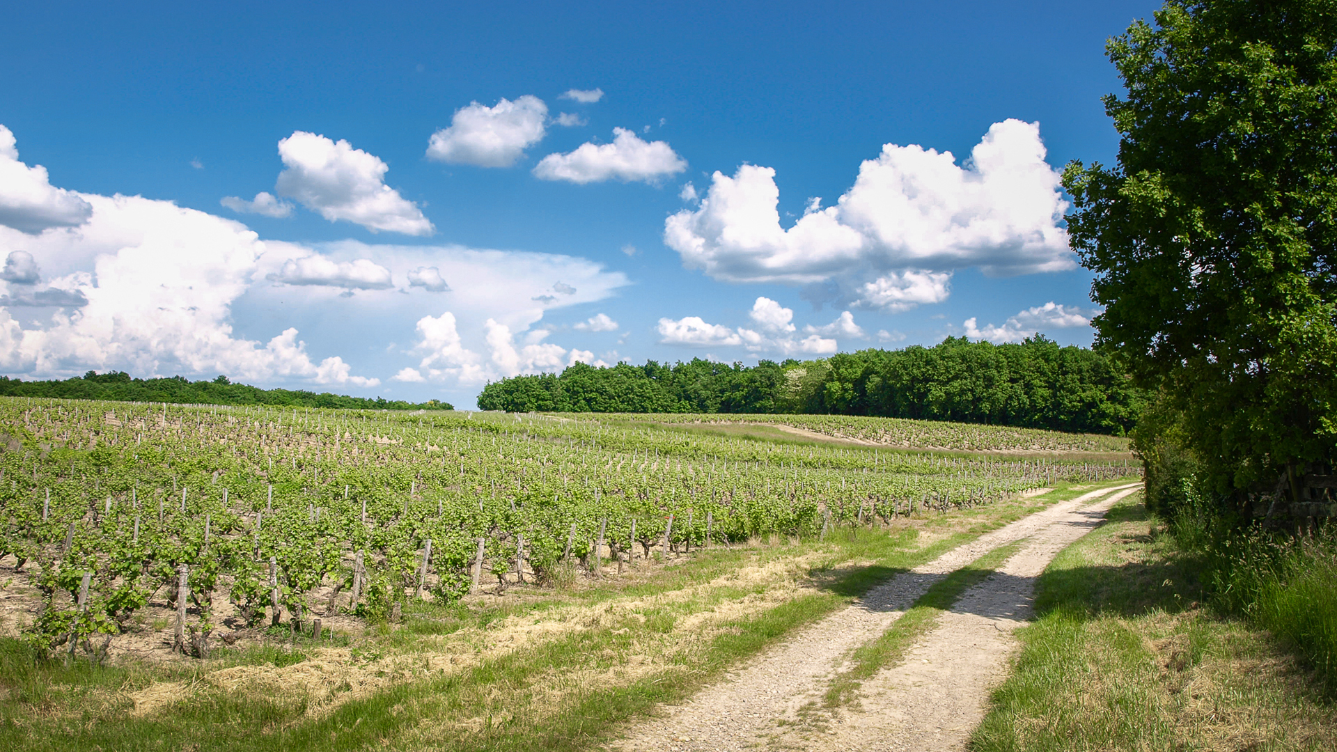 Loire Valley wine route - Vouvray
