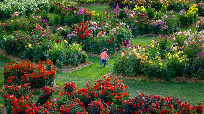 La Bourdaisière garden - Loire Valley