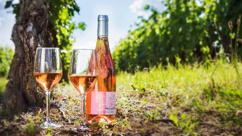 Chinon vineyard - Loire Valley