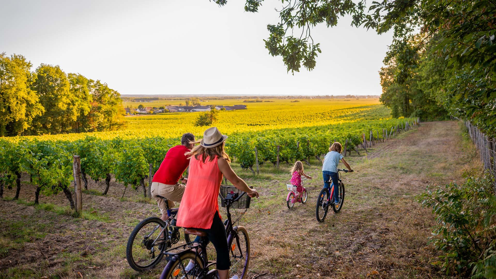 Bourgueil vineyard