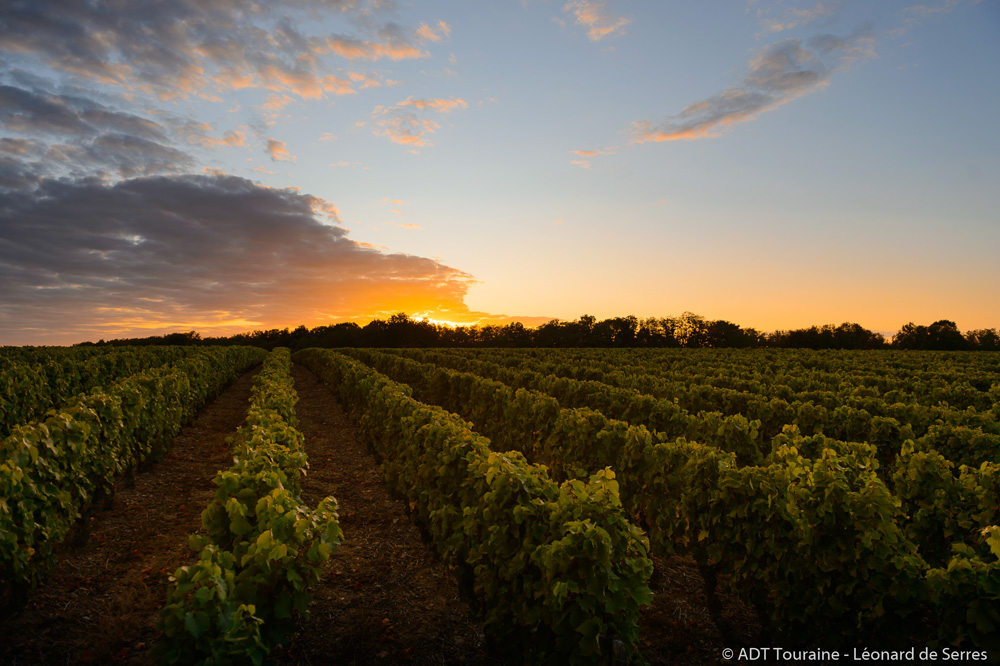 Meeting up in the vineyards at dusk - Vouvray wine