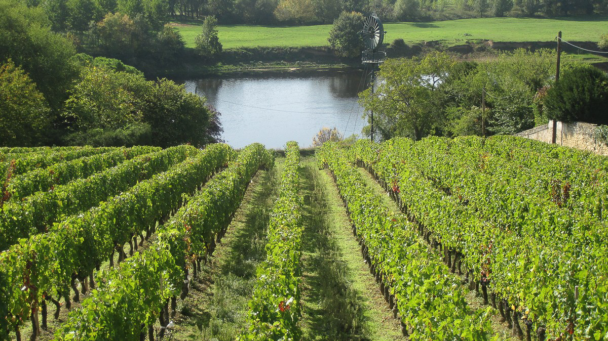 The Vienne River, just below the vines of Charles Joguet estate