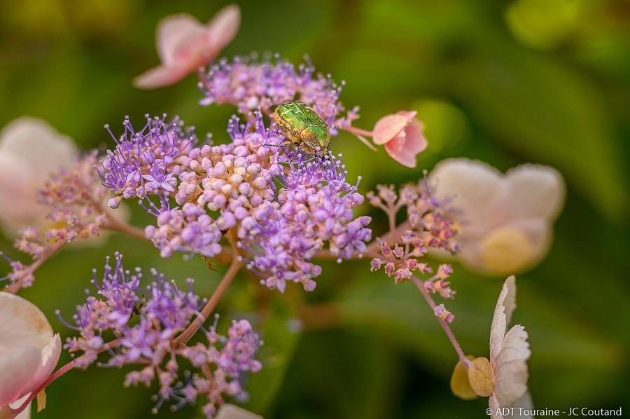 One of the wonders in Mireille's garden