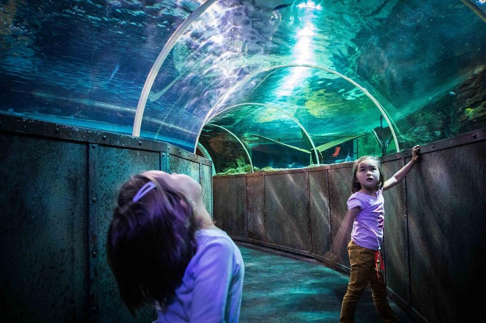 The Grand Aquarium de Touraine