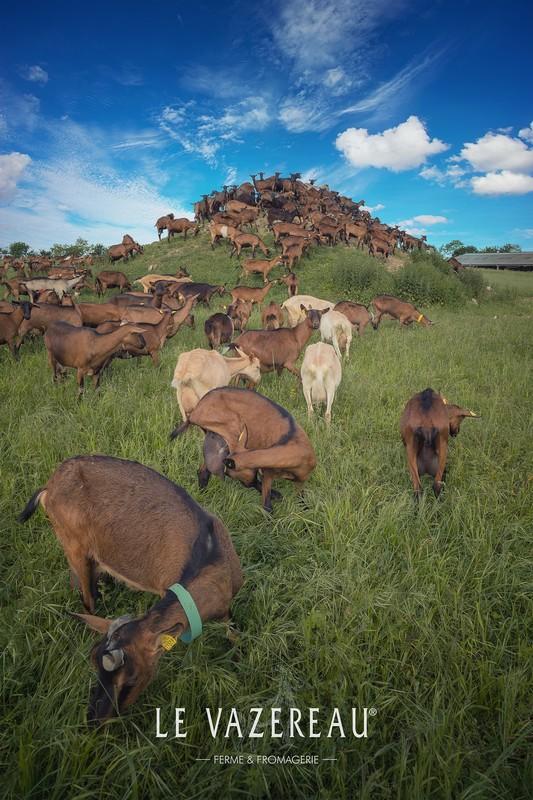 Le Vazereau – Goat farm-2