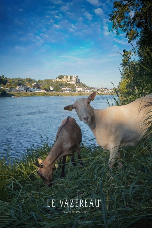 Le Vazereau – Goat farm-4
