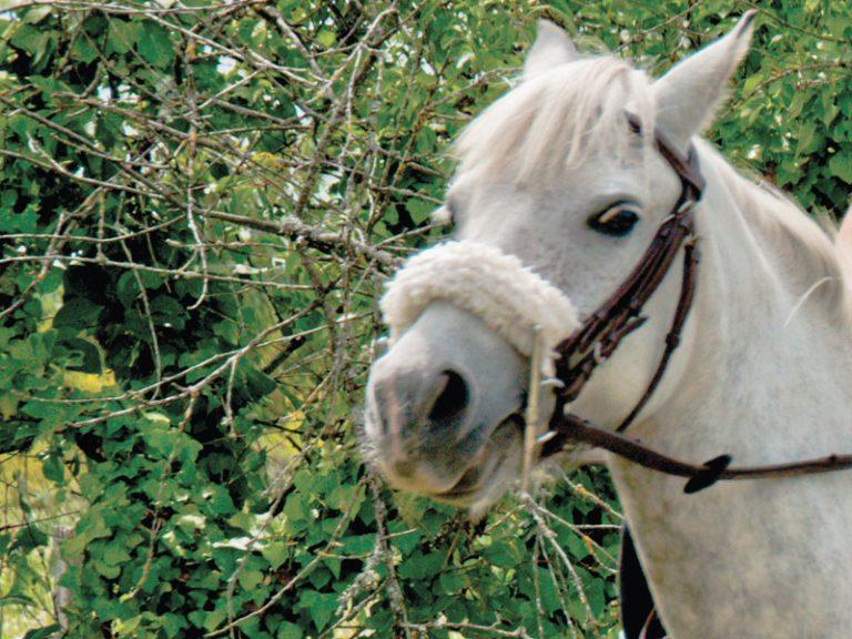 L'Alezane – Riding lessons-2