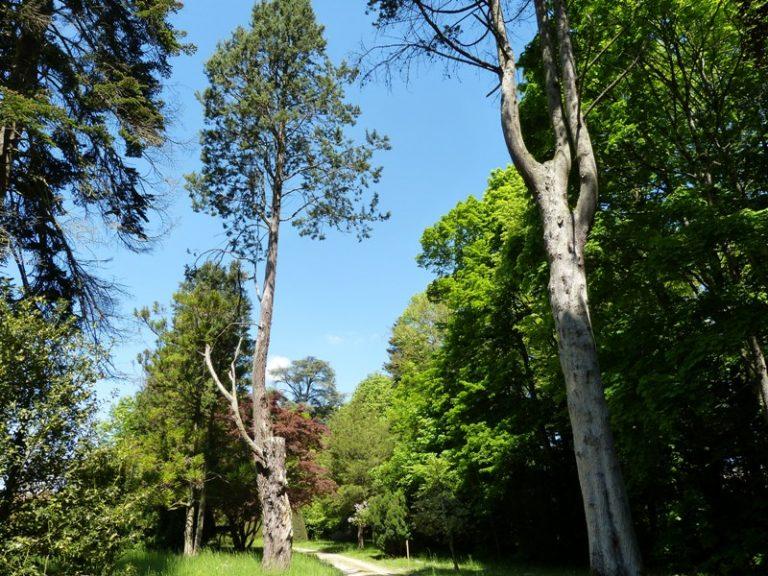 Château, parc et jardins d'Azay-le-Ferron-9