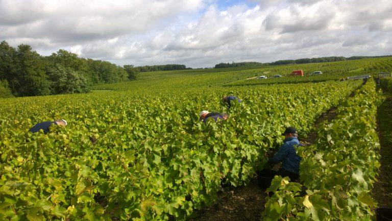 Musée de la vigne, du vin et de la tonnellerie-4