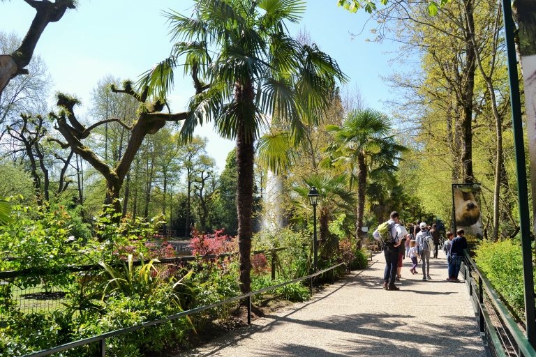 ZooParc de Beauval-8