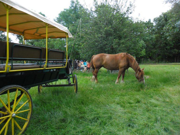 Les attelages de Villandry – Carriage rides-8