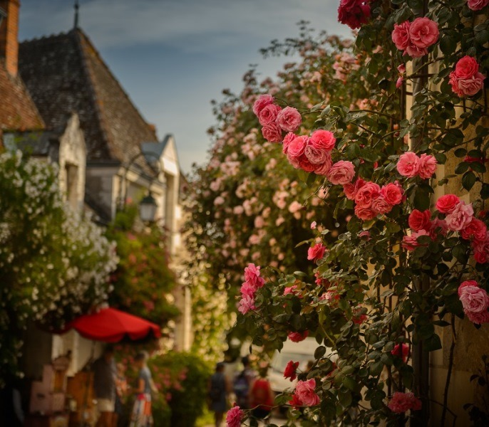 Roses and valleys-3