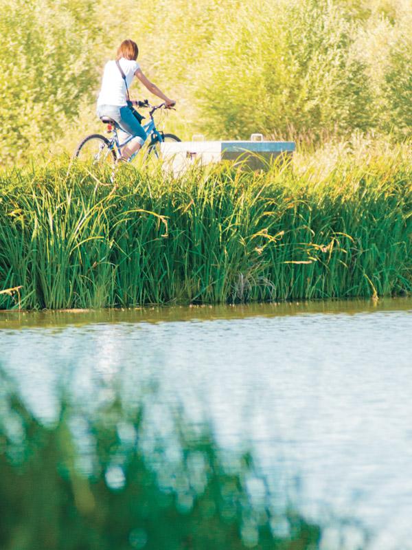 Loca Cycle – Bike rentals-2