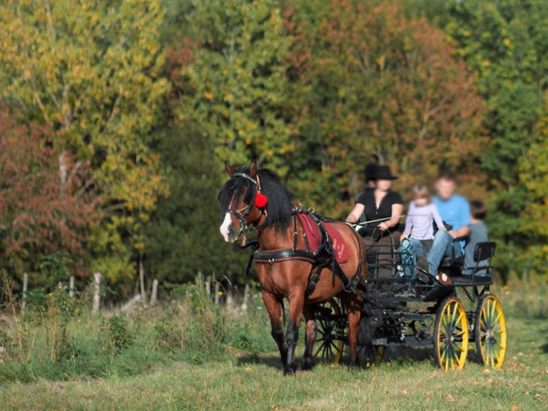 Domaine de Noiré – Wine property and Horse-and-carriage tour in Chinon-1