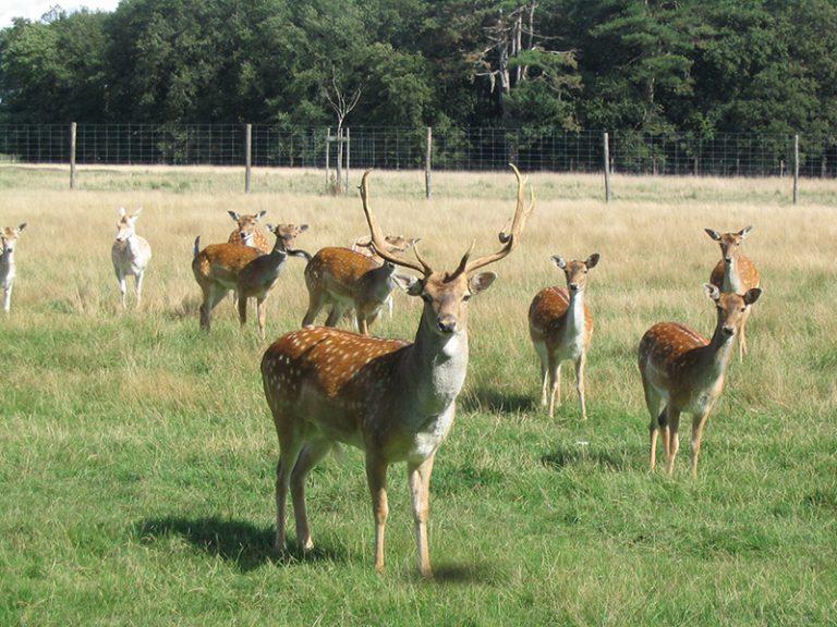 Beaumarchais Wildlife Park-3