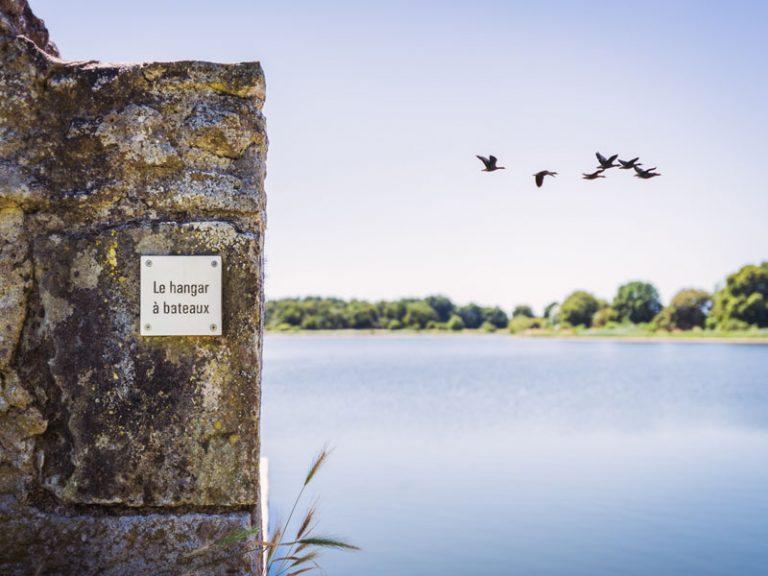 Watching birds around the Louroux pond-1