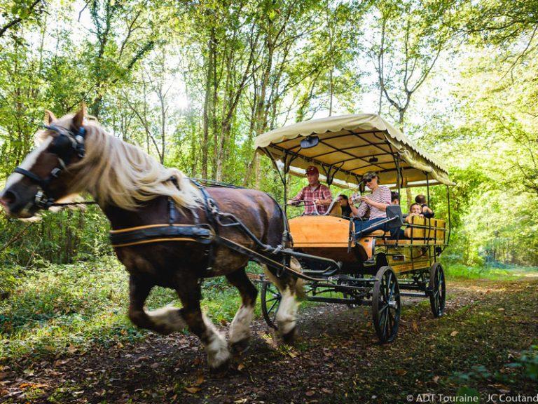 Les attelages de Villandry – Carriage rides-2