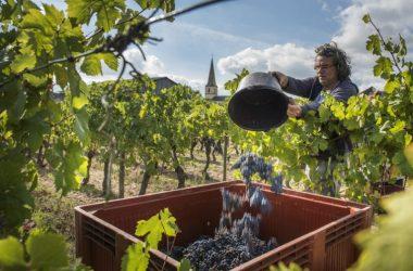clos-des-quarterons-vignerons-vendanges-credit-2018-amirault