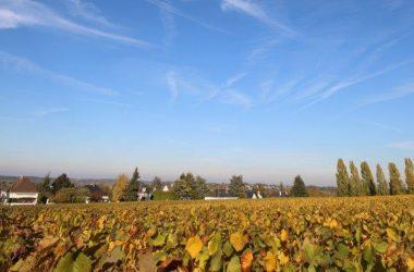 domaine-de-la-gabillere-vignesperspective