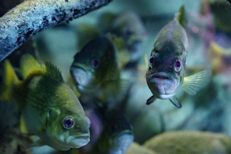 Loire Valley Aquarium-5