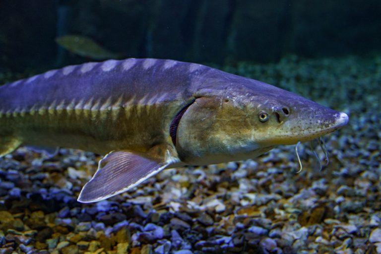 Loire Valley Aquarium-6