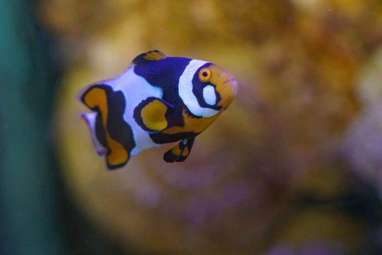 Loire Valley Aquarium-1