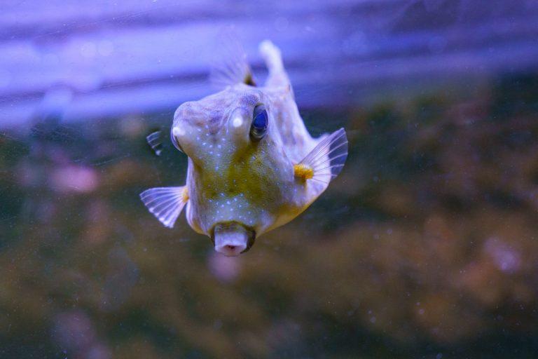 Loire Valley Aquarium-9