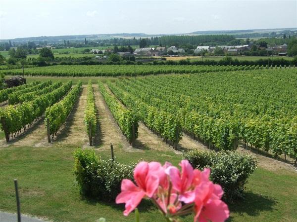 Between the Juche-Pie woods and vineyards-1