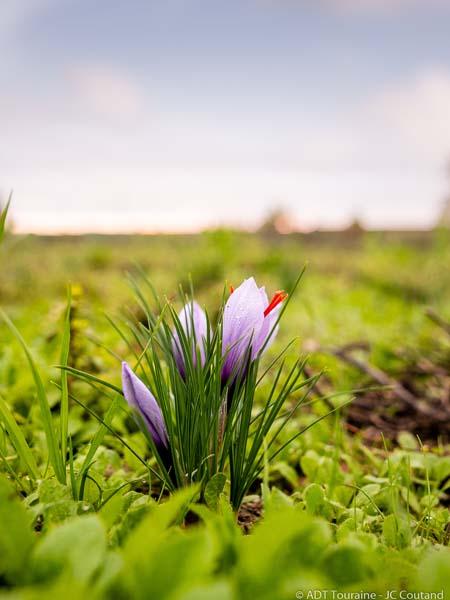 Safran de Val – Saffron farm-2