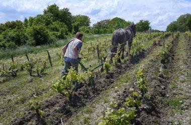 travail_vignes_cheval