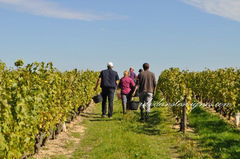 Wine Tours & wine tastings in the Loire Valley-1