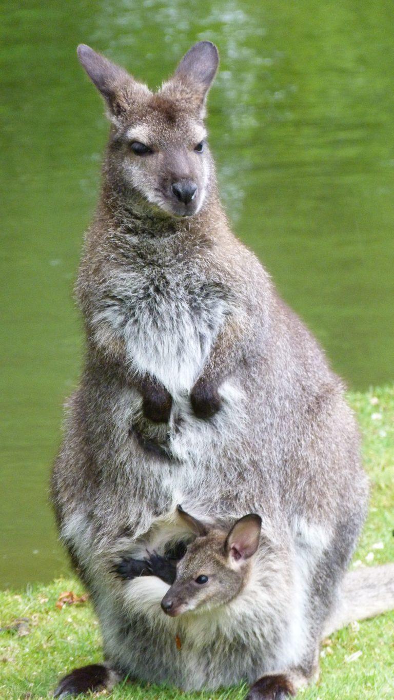 Beaumarchais Wildlife Park-8
